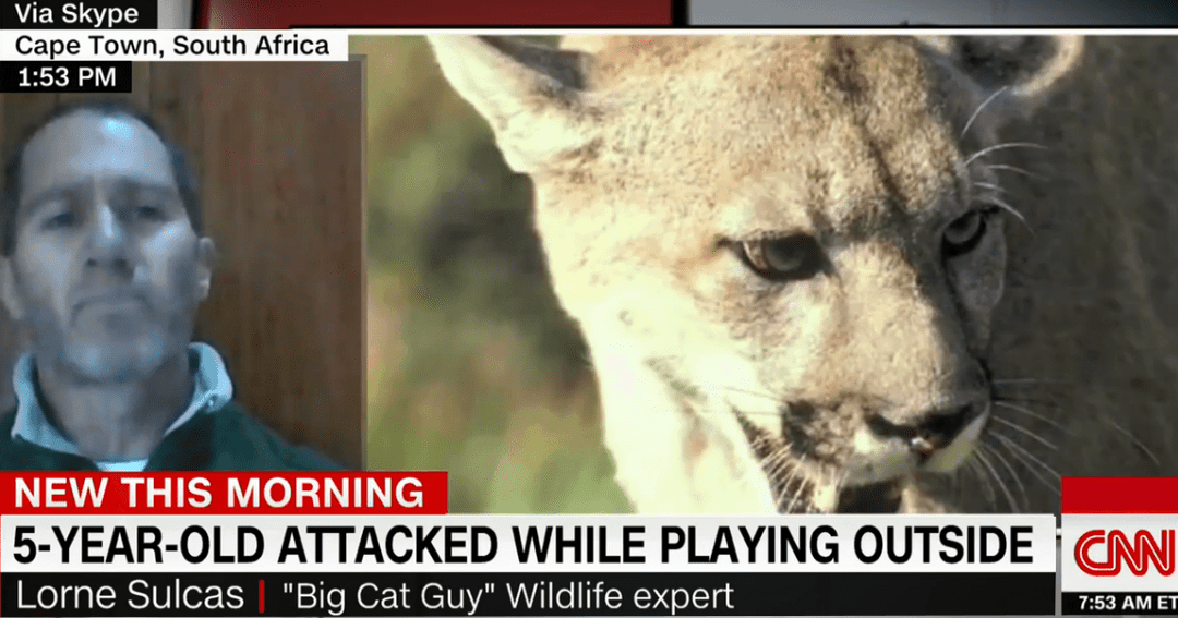 My Interview with CNN – Mountain Lions